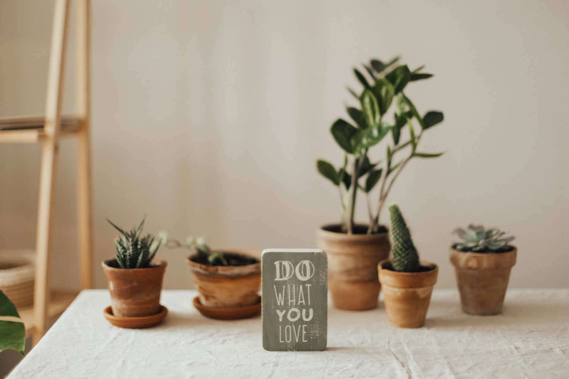 Best Air Purifying Plants for Home in India